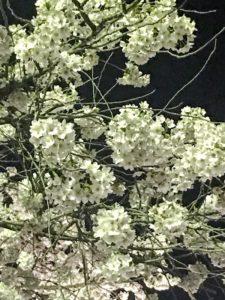水沢 花見